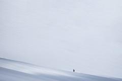 Snow-White (CoolMcFlash) Tags: snow white winter cold minimalistic minimalism minimalistisch simplicity fujifilm xt2 person hiking schnee weis kalt wandern mountain berg fotografie photography nature natur negativespace copyspace xf100400mmf4556 r lm ois wr dachstein