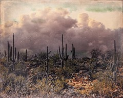 Saguaros with Clouds (Chuck Pacific!) Tags: saguaro cactus catalinastatepark tucson arizona distressedfx distressedtextures photomanipulation photoart formulasapp snapseed photoartistry