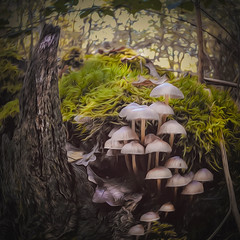 Game of Shrooms (Fr@ηk ) Tags: img7002kopie mrtungsten62 frnk dream fairytale nature mushrooms fall autumn art cover book illustration album cd vinyl music 425