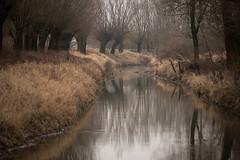 ... (Fotagi) Tags: river trees tree nature poland landscape winter wierzby drzewa przyroda krajobraz rzeka woda podkarpacie polska plener odbicia korony