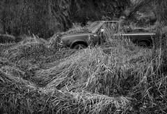 Thornton, Washington (austin granger) Tags: thornton washington palouse truck grass evidence time growth overgrown nature impermanence film gw690ii ortho