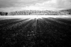 Time of the long shadows (stefankamert) Tags: landscape shadows ricoh griii ricohgriii noir noiretblanc blackandwhite blackwhite stefankamert bw light evening forest trees people wideangle gr