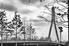 trees and bridge (margycrane) Tags: mostświętokrzyski most bridge trees drzewa warszawa powiśle warsaw blackwhite citylandscape sonyilce7m3 85mmf14za