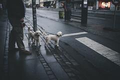 (Fahad0850) Tags: leica m240 street streetphotography streets copenhagen