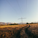 Field with an overhead electricity line