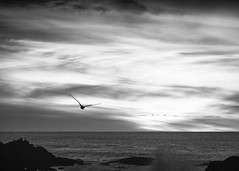 20191216-DSCF7462-L (Larry Moberly) Tags: pacificgrove california unitedstates