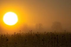 winter sun (andre.kirtz) Tags: felder sonnenblumen nebel morgenstimmung baum winter schweiz birri januar reussebene naturschutz baumgruppe harmonisch freiamt natur aargau