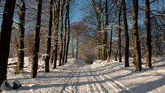Planken Wambuis (jandewit2) Tags: planken wambuis sneeuw winter wood bos bomen natuur nature nikon natuurmonumenten netherlands nederland