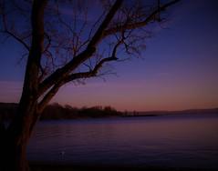 C'è nel giorno un'ora serena che si potrebbe definire assenza di rumore, è l'ora serena del crepuscolo. (V. Hugo) (ornella sartore) Tags: lago tramonto inverno albero cielo colori allaperto canon
