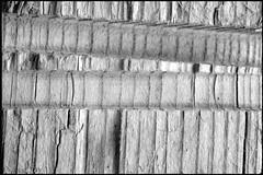 Fundstück 37 / Find 37 (Harald Reichmann) Tags: holz schnitt fundstück muster unterlage alltagskunst