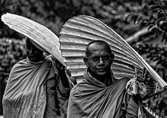 Sri Lanka - Moines à Kandy. (Gilles Daligand) Tags: srilanka ceylan kandy moines ombrelles noiretblanc bw monochrome