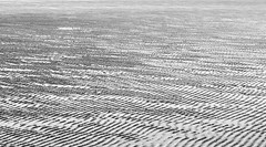 Abstract Beach at Low Tide (M.T.A.V) Tags: bw blackandwhite blackwhite beach bythebeach black britishcoast bythewater southcoast seaside south seashore canon canoneos750d canon750d coast eastwittering monochrome abstract impressionistic minimal minimalist simple simplicity less photography photograph pattern westsussex sandy efs1855mm