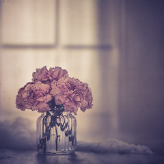At home (Ro Cafe) Tags: stilllife flowers dianthus vase window naturallight softlight softfocus homely pastelcolors textured nikkor105mmf28 sonya7iii