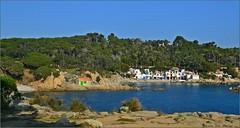 Un soleado día de enero (Luisa Gila Merino) Tags: nikon cieloazul mar azul paisaje arboleda landscape maisema mediterráneo palamós cataluña s'alguer enero belleza playa litoral cala casas