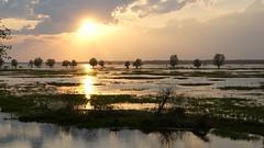 *** (pszcz9) Tags: polska poland przyroda nature natura naturaleza ujściewarty pejzaż landscape drzewo tree zachódsłońca sunset woda water beautifulearth sony a77