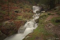 El Reino del Tiempo... (cienfuegos84) Tags: cercedilla naturaleza nature river rio