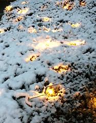 Snow covered holiday lights (karma (Karen)) Tags: baltimore maryland home frontyard bushes holidaylights snow iphone