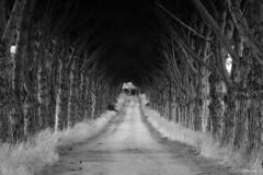 This Way (bw) (Gerald Lang) Tags: sonyalpha7ii sonya7ii schwarzweis noiretblanc blackwhite blackandwhite bw monochrome einfarbig sonyilce7m2 allee treelinedavenue avenuebordéedarbres import05092019 italien italy toskana tuscany talamone
