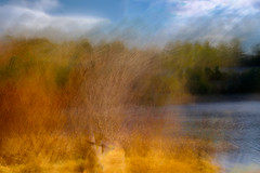 Down By The Water (DavidSenaPhoto) Tags: fujinon35mmf14 fuji fujifilm photoimpressionism lake pond intentionalcameramovement woods water icm multipleexposure xt2 fineartphotography impressionisticphotography carverpond impressionism