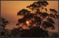First sun in over a month (itsallgoodamanda) Tags: smoke bushfiresmoke sunrise silhouettetree sun morning australiaburning amandarainphotography australia australianlandscape australianphotography australiassouthcoast summer2019 photography photoborder eeriesky itsallgoodamanda shoalhaven