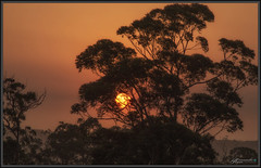 First sun in over a month 2 (itsallgoodamanda) Tags: smoke bushfiresmoke sunrise silhouettetree sun morning australiaburning amandarainphotography australia australianlandscape australianphotography australiassouthcoast summer2019 photography photoborder eeriesky itsallgoodamanda shoalhaven