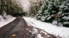 First Snow (Matthew James Lewis) Tags: washingtonstate washington winter aldertrees alonetime snow moss mapletrees road hemlocktrees bigquilvalley peaceful pacificnorthwest landscape forest firtrees ferns
