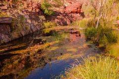 Pool Reflection (christorrington) Tags: dales gorge walk karijini westernaustralia circularpool water pond billabong reflection