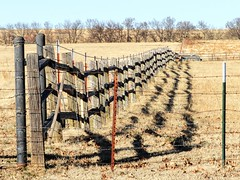 Side by Side (clarkcg photography) Tags: sidebyside fence barbedwire tpost wood pole rail shadows winter fencedfriday