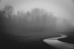 Into the Mist (Joe_R) Tags: bw trees blackandwhite fog landscape lakeelkhorn columbia nature