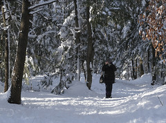 Souvenir/Memories (bd168) Tags: winter sun forest snow heavy walkingtrail photo woman