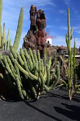 (Explored) Jardin de cactus, Lanzarote, Islas Canarias, Spain, Nikon_D810, January_2020_107 (tango-) Tags: lanzarote islascanarias canarie canaryislands 加那利群島 جزرالكناري kanarischeinseln