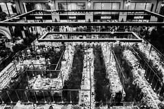 Horde (koen_jacobs) Tags: horde streetphotography blackandwhite blur antwerp