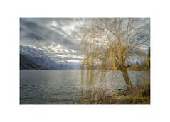 At the Lakes of Salzkammergut (My digital Gallery) Tags: gmunden trauerweide winter upperaustria oberösterreich europe eu lake traunsee salzkammergut see alpen alps traunstein clouds wolken grau gray