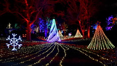 Lincoln Park Zoo Lights (Robby Gragg) Tags: lincoln park zoo christmas light lights chicago