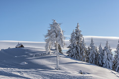 Winter wonderland (mystero233) Tags: no people winter snow outdoors nature tree landscape scenery sky cold temperature mountain white color forest travel hill scenics wagrain austria europe ski skiing hut frozen