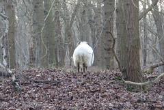 Last day of December (with cold light) (Elisa1880) Tags: the hague solleveld den haag nederland netherlands scheep schaap