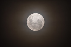 Glowing full moon in a smoky hazy night sky (Merrillie) Tags: glow lunarcycle hazy astronomicalbody bushfiresmoke glowing naturalsatellite moon planetary astro haze astrology smoky sky satellite rising solarsystem dark night nature fullmoon moonphases nighttime luna lunar light