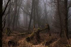 Spooky Oostvaardersveld Lelystad