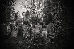 Returning to nature...... (Dafydd Penguin) Tags: grave tomb stone death nature trees lush growth cemetery blackandwhite backwhite black and white bw monochrome mono noir church bristol england arnos vale leica m10 21mm super elmar f34 asph