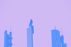 Signal PBST (Peter Rea XIII) Tags: art architecture artistsontumblr abstract artwork biutifulpics building city cameraraw d300s design experimental gradient imiging lensblr lightisphotography luxlit manchester nikon originalphotographers originalphotography photographersontumblr peterreaphotography photography pws p58 submission streetphotography street telescopical tower urban xonicamagazine ycphotographs purple blue bird raven corvus communication antenna perch colours
