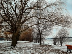 moody trees (angelinas) Tags: moody trees rivers outside nature arbres landscapes winter