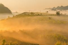 _MG_8262-64.2.0212.Tân Lập.Mộc Châu.Sơn La (hoanglongphoto) Tags: asia asian vietnam northvietnam northernvietnam northwestvietnam landscape scenery vietnamlandscape vietnamscenery mocchaulandscape nature naturelandscape sunrise clouds mountain flanksmountain vietnammountainouslandscape cloudsofmocchau canon canoneos5dmarkii tâybắc sơnla mộcchâu tânlập thiênnhiên thiênnhiênmộcchâu natureinmocchau bìnhminh mây mâymộcchâu núi sườnnúi phongcảnhvùngnúi topmountain dãynúi đỉnhnúi mâyluồnmộcchâu forest theforest rừng hoanglongphoto bìnhminhmộcchâu canonef24105mmf4lisusm hoamậnmộcchâu earlyfrost earlymorningfog fog mist fogofmocchau sươngsớmmộcchâu sươngmùmộcchâu