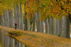 DEPORTE SIN CONTAMINACION (marthinotf) Tags: naturaleza canal ciclismo paseoenbicicleta otoñoenelcanal arboles agua hojas reflejos