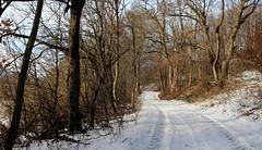 Those wonderful snowy paths! / Azok a csodás havas utak! (Ibolya Mester) Tags: hungary magyarország natur nature landscape forest tree trees outdoor path snow winter woods color colors canon canoneos600d bakonybél
