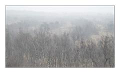 Bright (Theo Bauhuis) Tags: hoogveen nevel observatiepost uitkijktoren vragenderveen fog mist white peat moor veen birch berken achterhoek natuurmonumenten