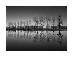 Serie miroir (2) (Boris Dumont) Tags: miroir tree trees arbres reflet reflection fineartphotography fineart landscape seascape lake seascapephotography bw bwphotography
