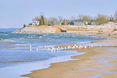 025452a  Erosion Has Claimed Several Homes And Roads Along The Michigan Shoreline Of Lake Michigan... (David G. Hoffman) Tags: lake lakeshore lakemichigan seagulls waves dunes erosion