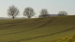 Les sentinelles (Gisou68Fr) Tags: arbres trees champs fields paysage landscape janvier january 2020 alsace france 68 hautrhin grandest ngc