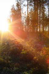 Morning sun (Rico the noob) Tags: dof z7 sunrise nature 35mmf24 outdoor 35mm trees tree travel forest sky sun landscape 2019 finland published