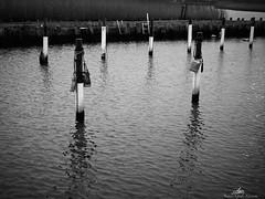 2020-01-10 15.02.12 - Tøjring, Sort-Hvid, Dag 10-366, Uge 2, Randers Fjord, Uggelhuse, Randers - P1100016 - ©Anders Gisle Larsson